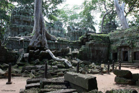 Tree over the ruines of Preak Khan, Cambodia