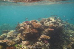 Seabed in the Great Barrier Reef