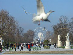 Tuileries Garden with the snow